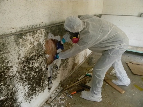 Tips on Removing Mold